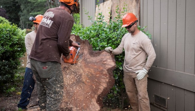 tree service sacramento, sacramento tree care, tree removal sacramento, tree trimming