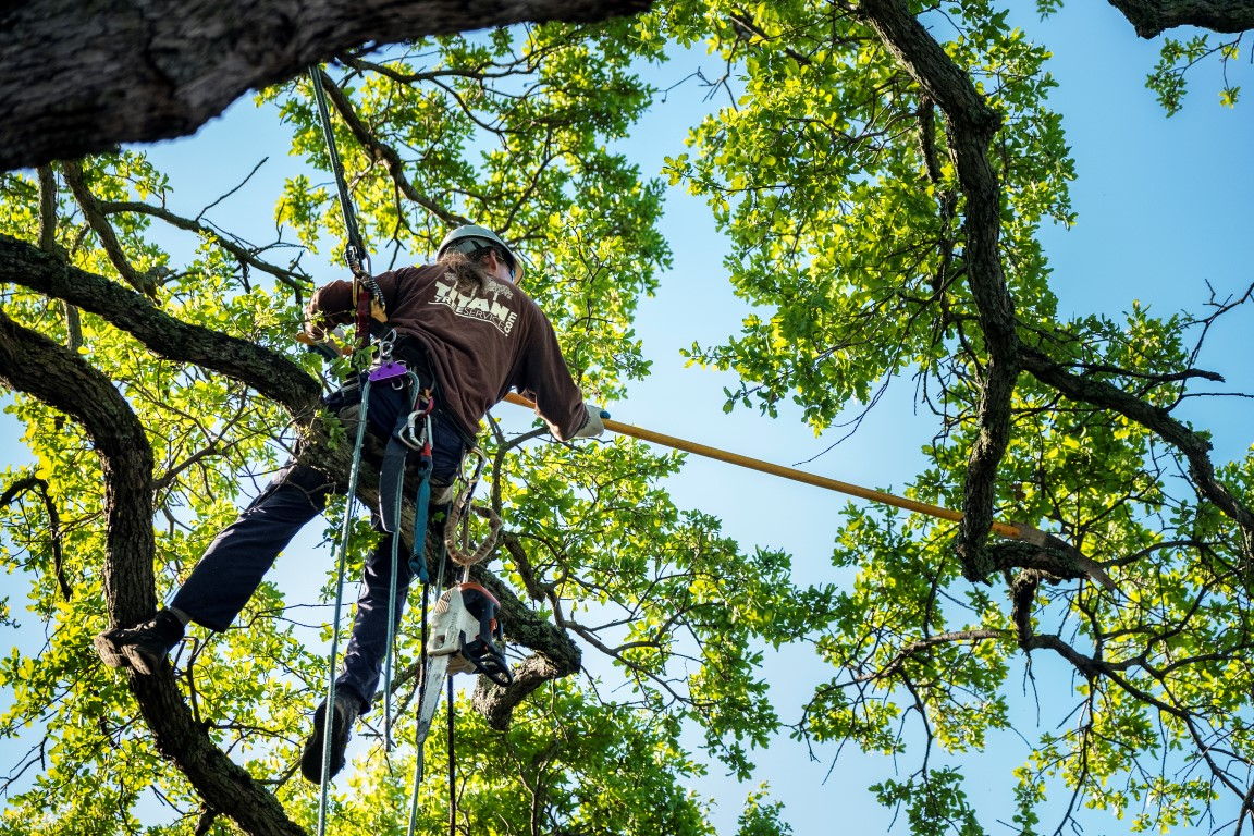 Tree Pruning And Shaping Titan Tree Service