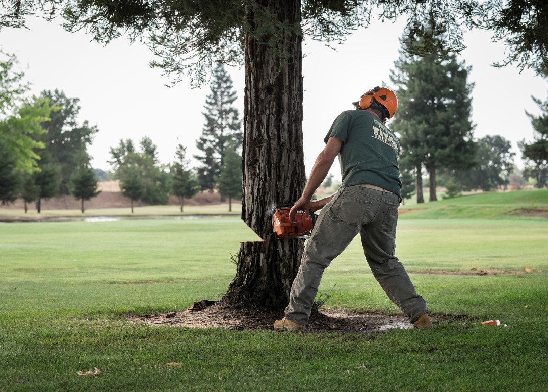 Image result for tree trimming golf course
