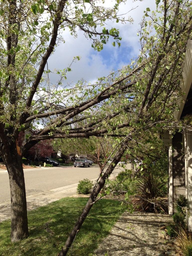 Emergency Tree Service – Removal of Fallen Tree Branch ...