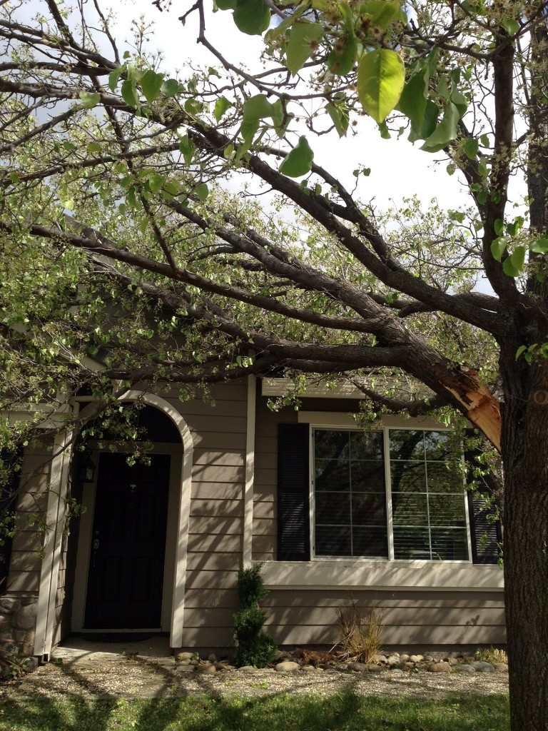 Emergency Tree Service - Removal of Fallen Tree Branch ...